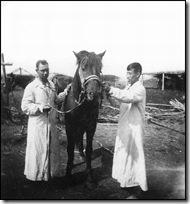 папа лечит коня